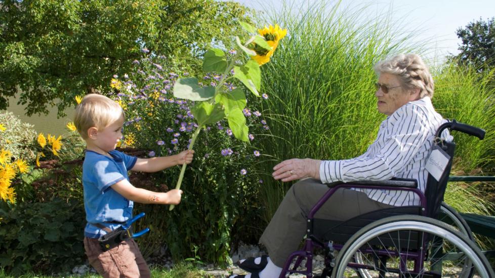 Online Infoabend Universitätslehrgang Gartentherapie
