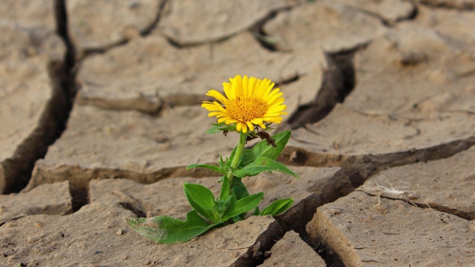 """TREFFPUNKT:HOCHSCHULE – """"Landwirtschaft und Klimaschutz"""""""