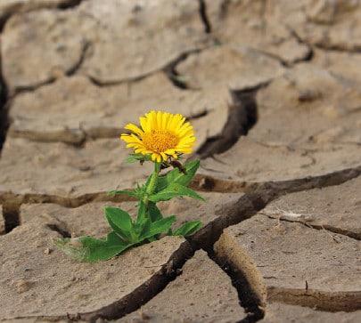 Klimawandel in der Land- und Forstwirtschaft @ pixabay
