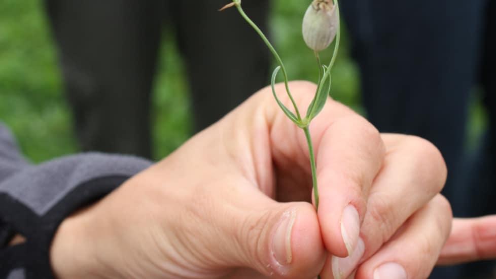 Infoabend Hochschullehrgang für Wildkräuter und Arzneipflanzen